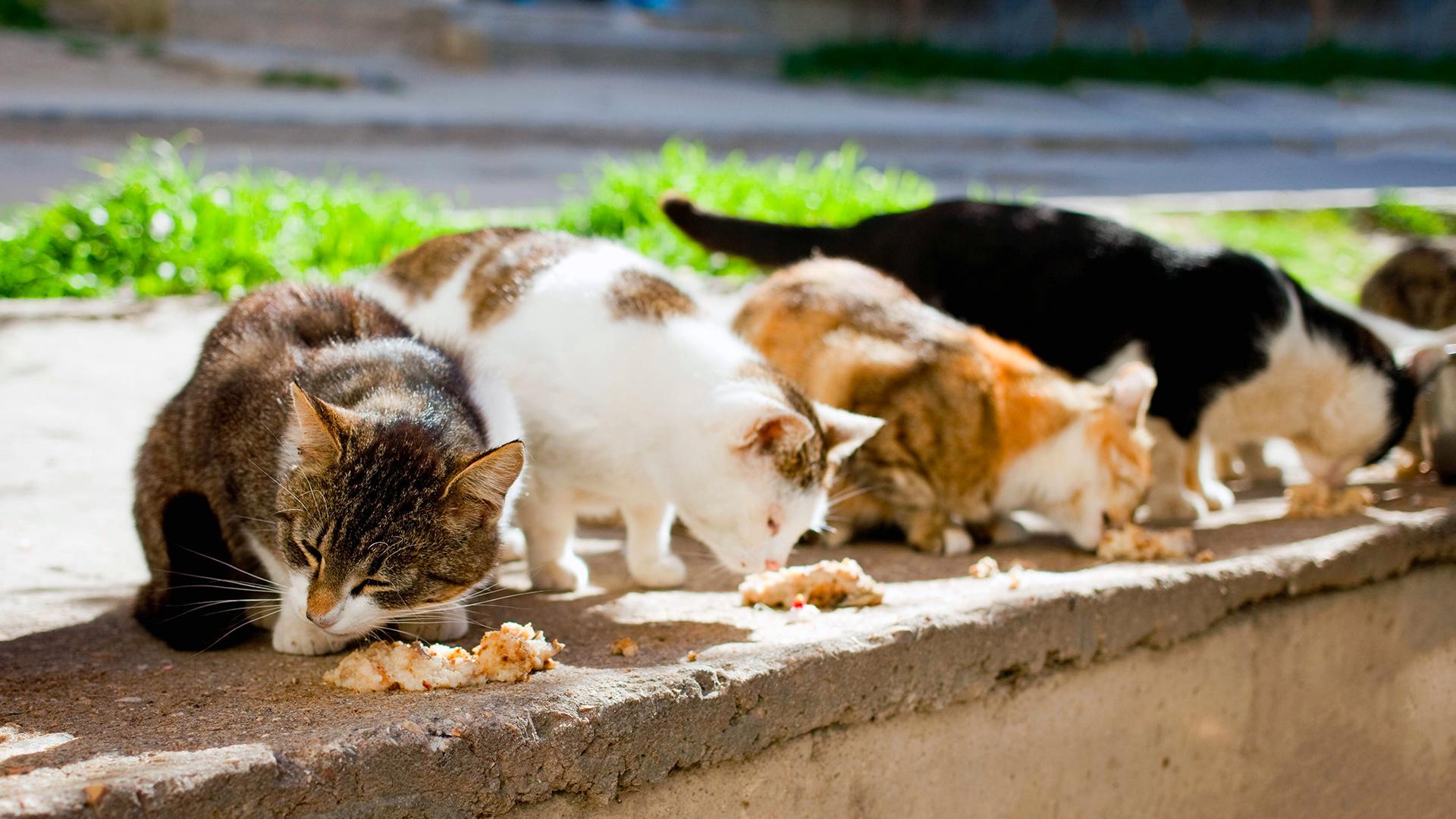 Gatti randagi das polizza colonie feline 03112019